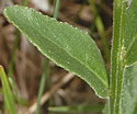 [photo of lower leaves]