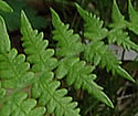 [photo of fronds]