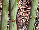 [photo of stems]