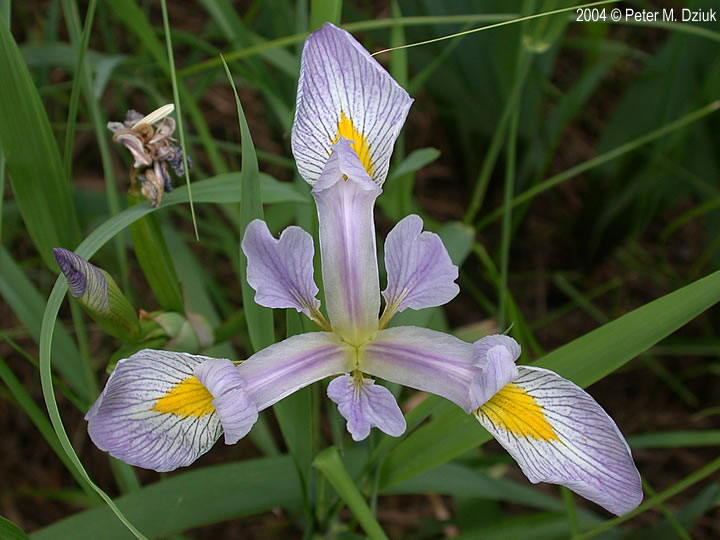 iris-virginica-14 Map Crosby on map munich, map santa fe, map austin, map monticello, map pasadena, map of mn, map buffalo, map victoria,