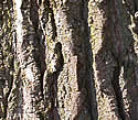 [photo of trunk]