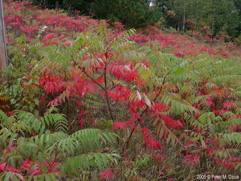 Red Flowering Bushes And Shrubs