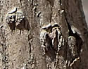 [photo of bark]