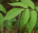 [photo of leaves]